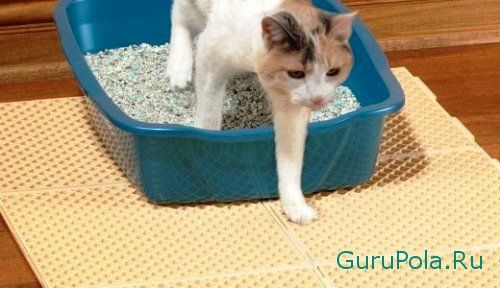 Удалить кошачий запах с линолеума