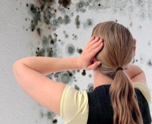 Как избавиться от грибка на полу
