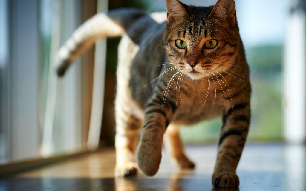 Выводим запах кошачьей мочи с пола надежно без следов